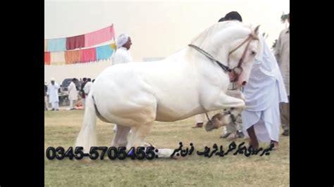 pakistan horse dance