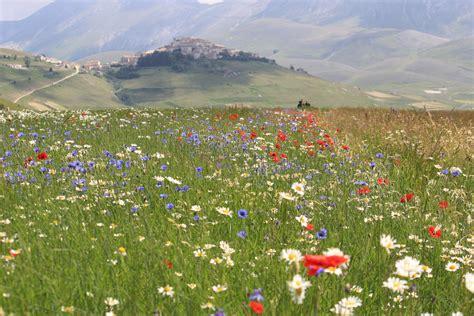 immagini prato fiorito prato fiorito viaggi vacanze e turismo turisti per caso