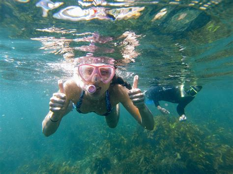 manly snorkeling tour ecotreasures sydney
