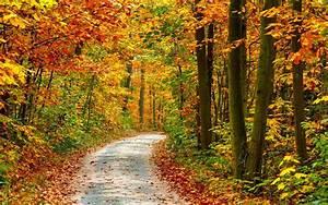 Schöne Herbstbilder Kostenlos : hd herbst hintergrundbilder hd hintergrundbilder ganzes ~ A.2002-acura-tl-radio.info Haus und Dekorationen