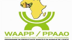 Culture De La Patate Douce : horticulture le fnraa finance la culture du manioc et de ~ Carolinahurricanesstore.com Idées de Décoration