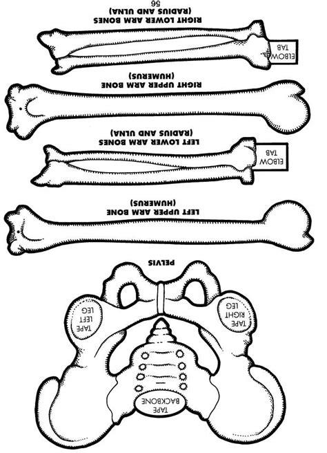 skeleton printable  images human body lesson