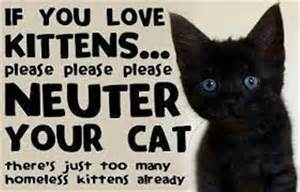 neutered cat welcome to canterbury district cp