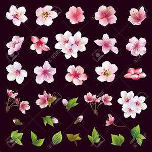 Dessin Fleur De Cerisier Japonais Noir Et Blanc : r sultat de recherche d 39 images pour fleur de cerisier ~ Melissatoandfro.com Idées de Décoration