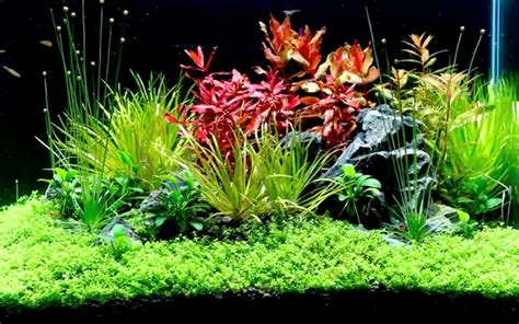 Best Substrate For Aquascaping by 7 Best Planted Tank Substrate Top Picks 2019 With Reviews