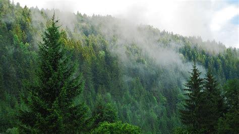 Tree Wallpaper Png by Pine Forest Desktop Background Hd Desktop Wallpaper