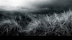 Abstract Black And White Nature Fields HD Wallpapers ...