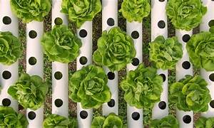 Regular Vs Hydroponic Nutrients The Differences Blog