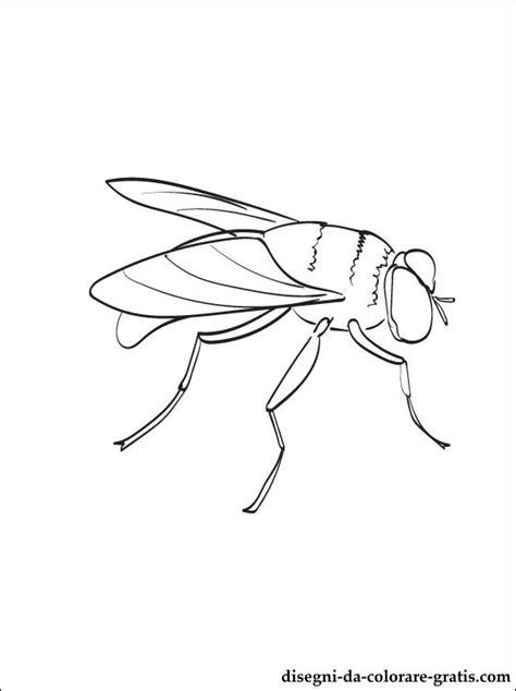 disegni da colorare  mosca disegni da colorare gratis
