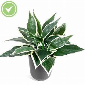 Mini Plante Artificielle : fougere mini plante verte artificielle maison et fleurs ~ Teatrodelosmanantiales.com Idées de Décoration
