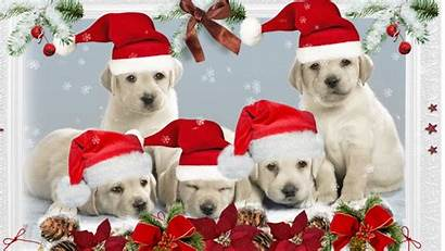 Desktop Christmas Puppy Dog Puppies Wallpapersafari Background