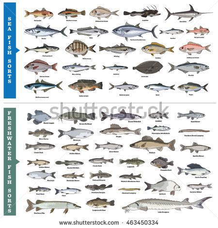 fish names types of fishes and their names www pixshark com images galleries with a bite
