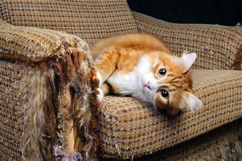 scratch happy cats  furniture mnn