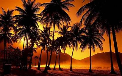 Palm Tree Wallpapers Sunset