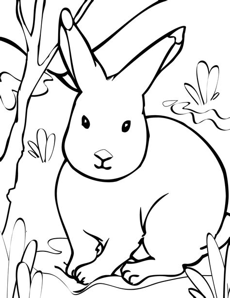 animal coloring pages print  page arctic animals
