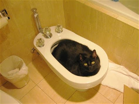 how do you after using a bidet tywkiwdbi quot wiki widbee quot if you use a bidet in the
