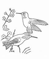 Hummingbird Coloring Pages Printable Flower Hummingbirds Bird Birds Simple Traceable Template Flowers Popular Getcoloringpages Monkey Library Clipart Getcolorings sketch template