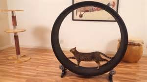cat running wheel one fast cat will help keep your moggy s motor running
