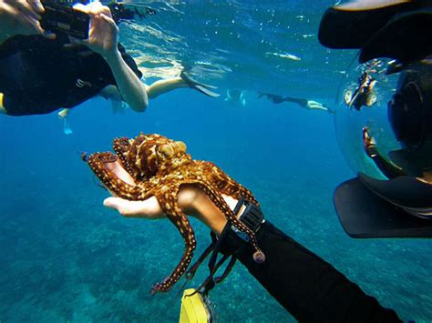 How To Dive by Learning How To Scuba Dive With Padi