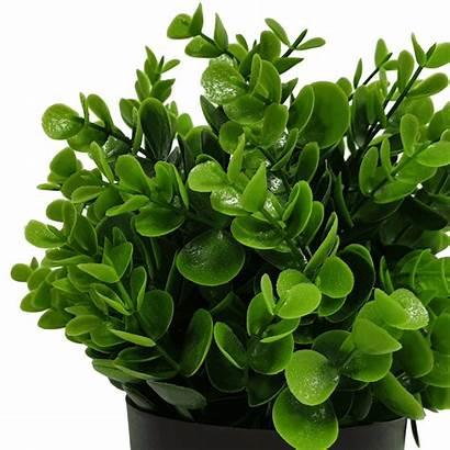 Potted Plant Artificial Peperomia Resistant 20cm Uv