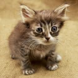 Sad Kitty Cat Faces