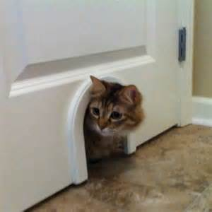 cat doors install on door to laundry room to give cat access to
