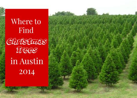 28 best where to buy live christmas tree where to buy
