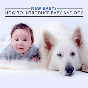 how to introduce your dog to a new baby With how to introduce a puppy to a dog