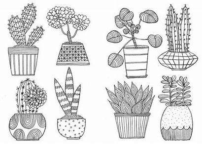 Coloring Colouring Mindfulness Pages Cactus Stress Plants