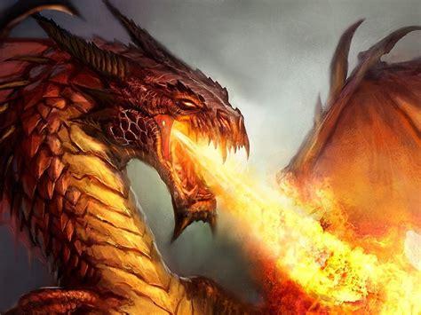 fire spitting dragon  wallpaperscom