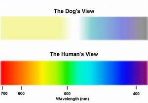 My Colour Shade Chart Can Your Dachshund See Color My Mini Doxie