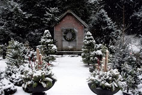 Planning For Your Winter Garden