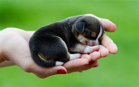 Animal Rescue Wallpaper - beagle puppy wallpapers wallpaper cave