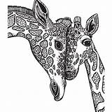Giraffe Coloring Pages Adults sketch template