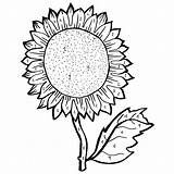Sunflower Coloring Pages Adults Drawing Seeds Young Sheets Seed Template Sheet Survival Getdrawings Printable Colorful Lawler Clipartmag Getcolorings sketch template