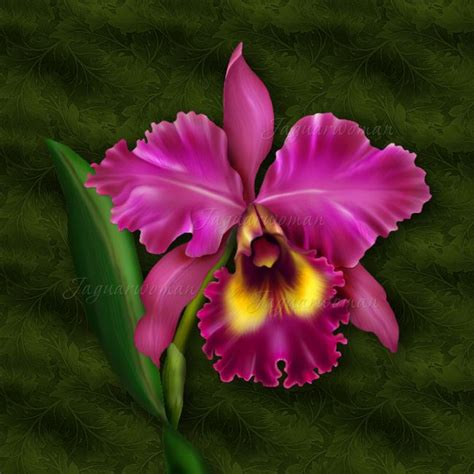 how to get an orchid plant to bloom again cattleya orchid for drawing pinterest orchid flowers flower and orchid plants