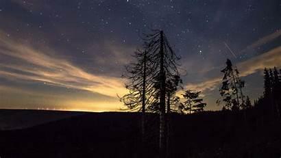 Sky Night Starry Trees 4k Stars Background