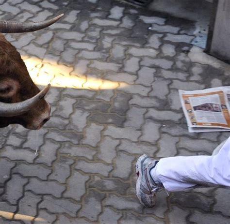 Running Of The Bulls Fiesta Bull Kills Man During