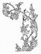 Coloring Cherry Blossom Tree Drawing Sheets Blossoms Wickedbabesblog Sakura sketch template