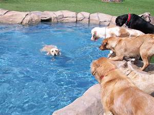 snug dog day care servicing all of san diego With dog boarding for puppies