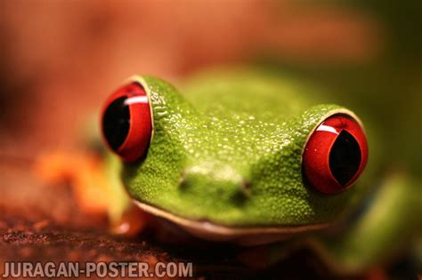frog jual poster  juragan poster
