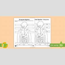 * New *ficha De Actividad El Aparato Digestivo  Cuerpo Humano, Salud