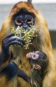 1000+ images about Just Monkey Business on Pinterest ...