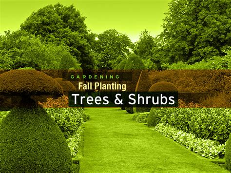 planting in fall fall gardening trees shrubs groundcover carycitizen