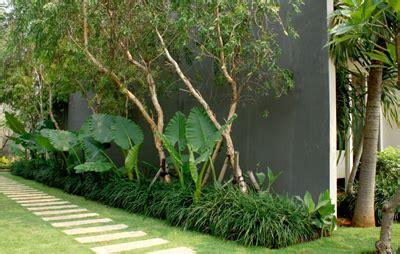 feng shui tanaman hias rumah tinggal arumsekartaji