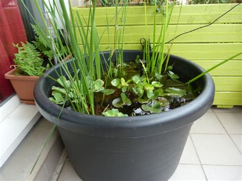 mini bassin sur mon balcon