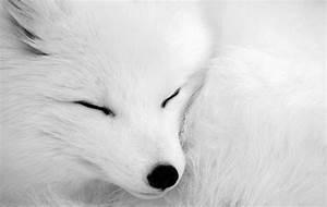 wolf wallpapers | wolf wallpaper | wallpaper wolf | wolves ...