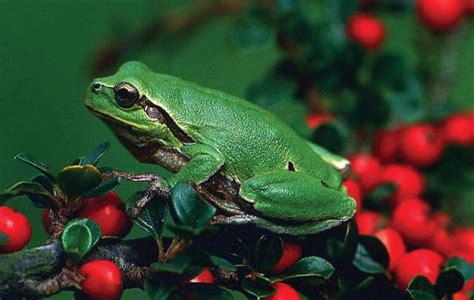 Perbedaan Vertebrata, Invertebrata Serta Contohnya