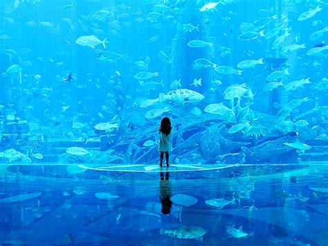 dubai aquarium dreams underwater zoo fish tank hotel aqaurium japan place