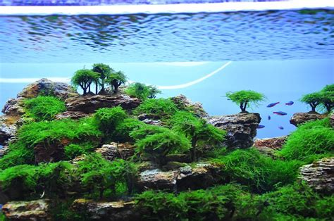 Aquascape Ideas by Aquascape Idea 4 Meowlogy